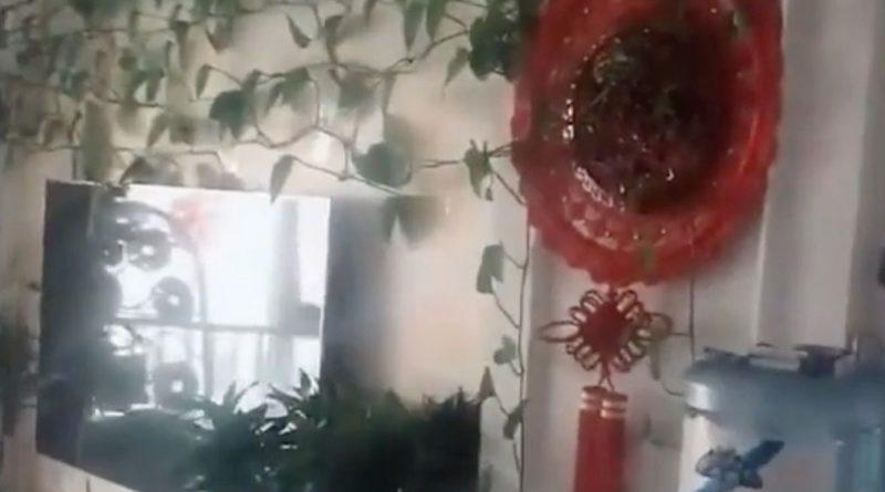 Чоловік попросив свого брата поливати рослини, які залишив в квартирі, але коли повернувся, на нього чекав дуже цікавий сюрприз